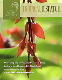 http://selbyorg.c.presscdn.com/wp-content/uploads/Tropical-Dispatch-May2015-cover.jpg