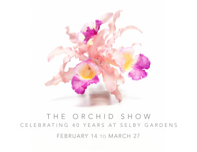 The Orchid Show at Selby Gardens